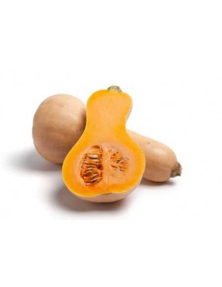 Calabaza cacahuete - Pieza - Agrorigen bio