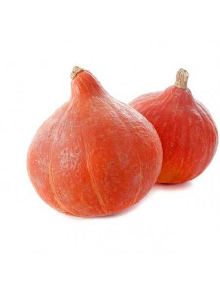 Calabaza pottimarron - Pieza - Agrorigen bio